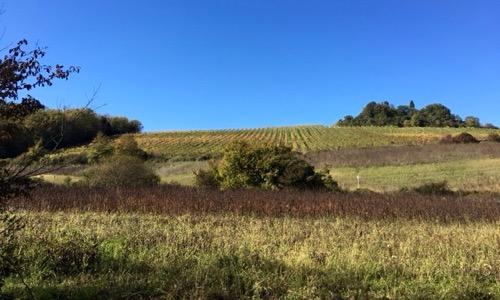 Weekend in Toscana: Chianti classico tra dimore storiche, cantine, corsi di cucina