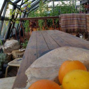 DiTendenza - Bologna dalla colazione all'aperitivo vista orto