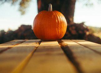 Storie di Halloween. Un'americana a Bologna