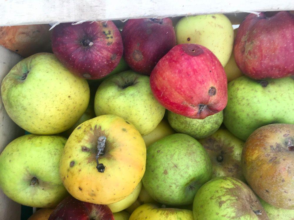 Le radici nel vaso: confettura di mele al sapore di strudel