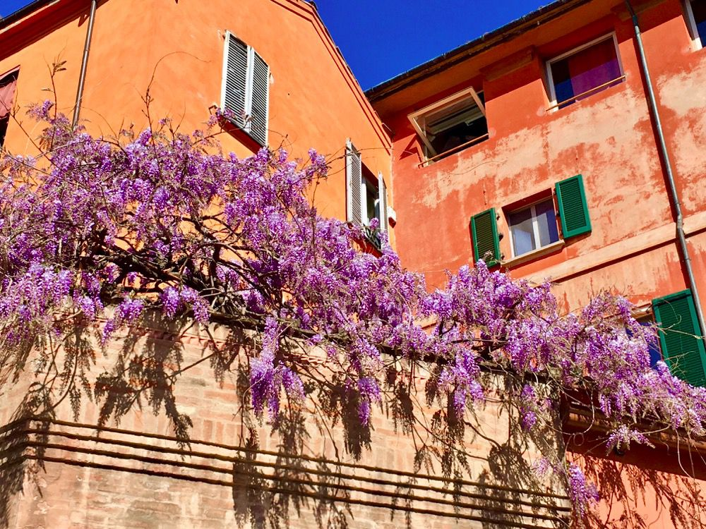 Bologna in Bloom: Flowers, Events and Private Gardens