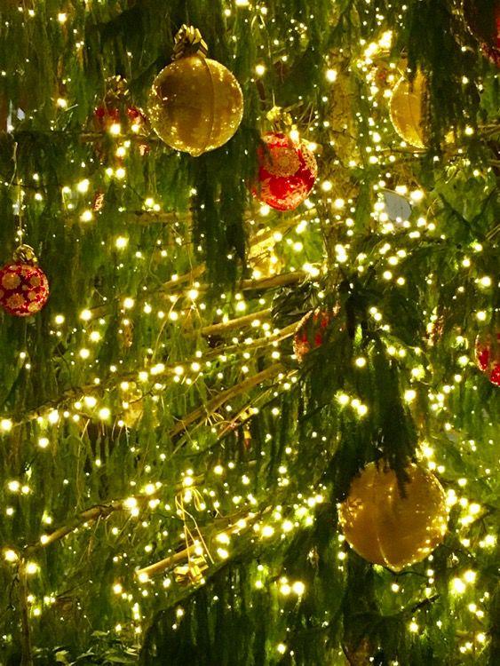 Bologna a Natale, 5 cose da fare. Mercatini di Natale, Presepi e Albero