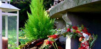 Come creare un bosco in 4 mosse a casa tua o nel tuo giardino